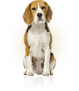 new york city bed bug dog inspections