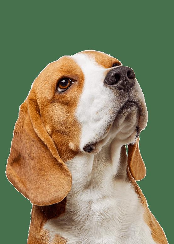 services beagle